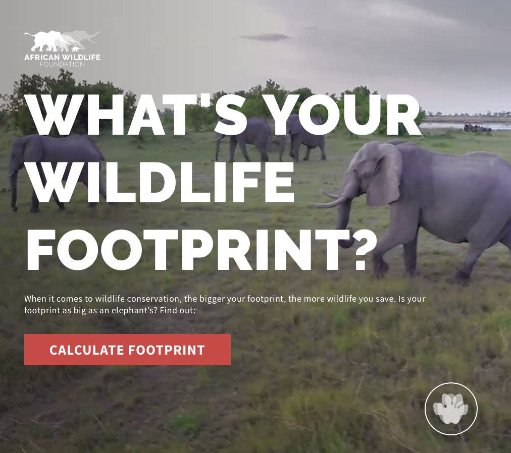image of Sanky Communications Wins 2018 Best Non-Profit Mobile Application Mobile WebAward for African Wildlife Foundation Wildlife Footprint